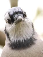 johnsbird