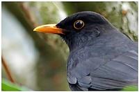 Oiseaux d'ailleurs 5458-32