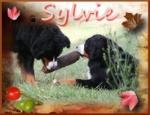 sylvie10