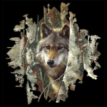 The_Wolf_11