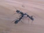 InsecteMan