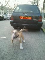 vanexx