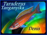 taraderus