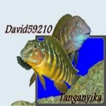 David59210