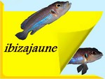 ibizajaune