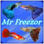Mr Freezor