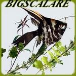 BIGSCALARE
