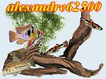 alexandre62500