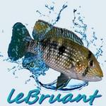 leBruant