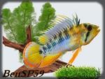 BenSP59