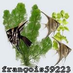 françois59223
