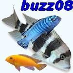 buzz08