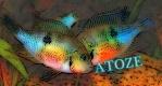 atoze