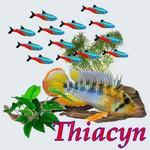 Thiacyn