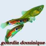 gourdin dominique