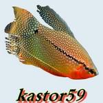 kastor59