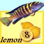lemon 8
