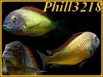 Phill3218