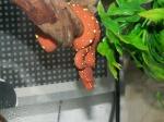 geckoaddict