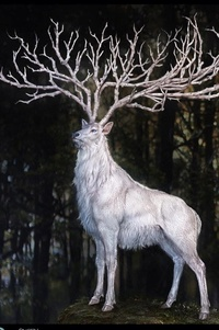 Lord Bruce Whitestag