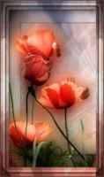 henriette rosa