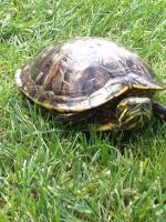 turtle-09