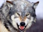 Mateus Werewolf