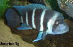 acuariom.lg