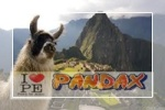 pandax