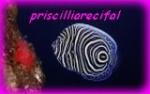 priscilliarecifal