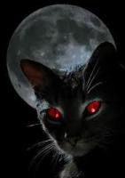 Nightclaw