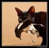 oldblackcat
