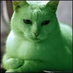 Le Chat Vert