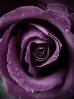 PurpleK