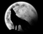 crazy_wolf
