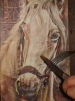 pas manger cheval
