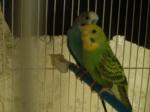 oiseaux d'algerie
