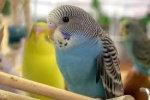 Mister_Birds