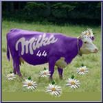 Milka44