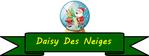 Daisy des neiges