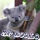 Mr Koala