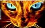 Spit-Fire