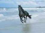 Horse-Dreamer