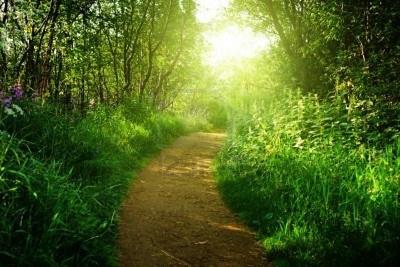 Poemas en versos libres Camino11