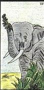 elephant ge