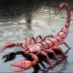 Scorpius_1