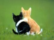cat freinds
