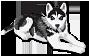 Амуниция для собак 1662819167
