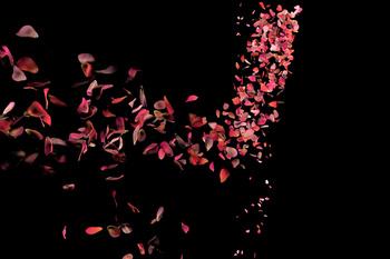 Pétale de Fleur