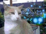 Rusty-cat